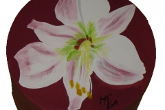 Schmuckschachtel Amaryllis rose
